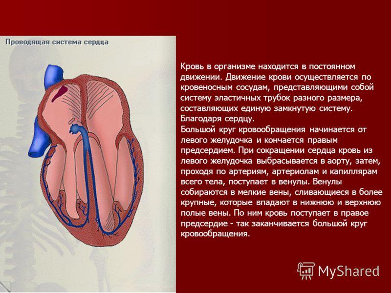 Кровь в организме находится в постоянном движении. Движение крови осуществляется по кровеносным сосудам, представляющими собой систему эластичных трубок разного размера, составляющих единую замкнутую систему. Благодаря сердцу. Большой круг кровообращ