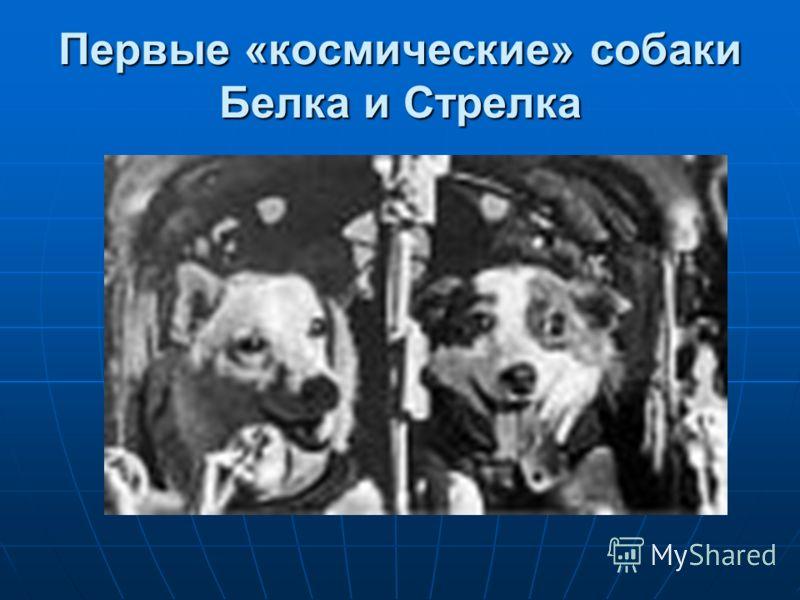 Первые «космические» собаки Белка и Стрелка