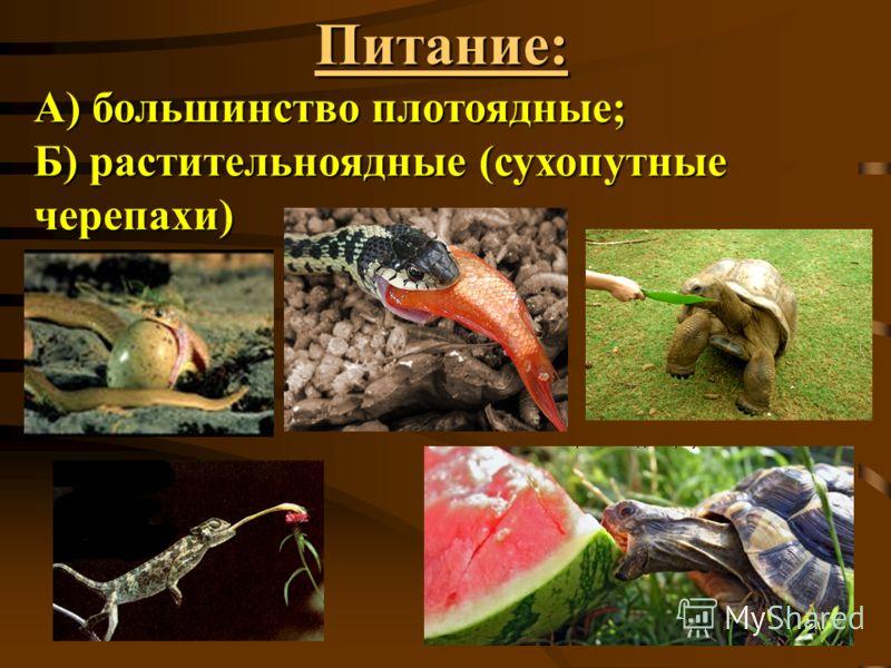 Питание: А) большинство плотоядные; Б) растительноядные (сухопутные черепахи)