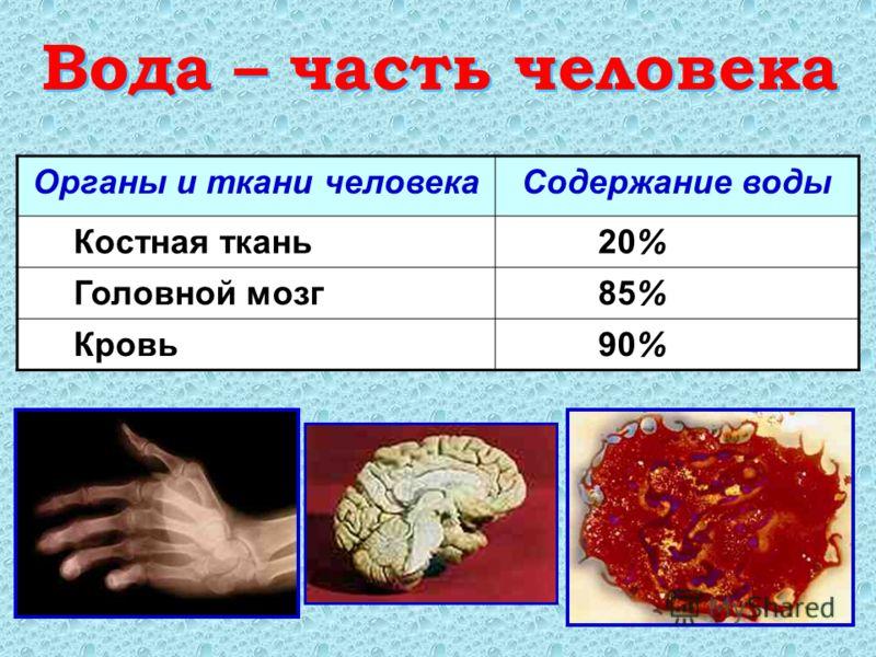 Вода – часть человека Вода – часть человека Органы и ткани человекаСодержание воды Костная ткань 20% Головной мозг 85% Кровь 90%