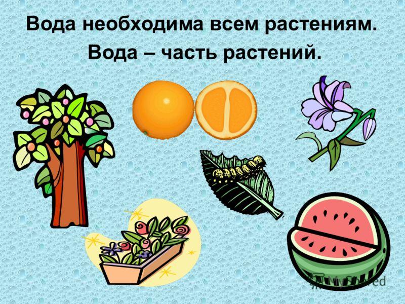 Вода необходима всем растениям. Вода – часть растений.