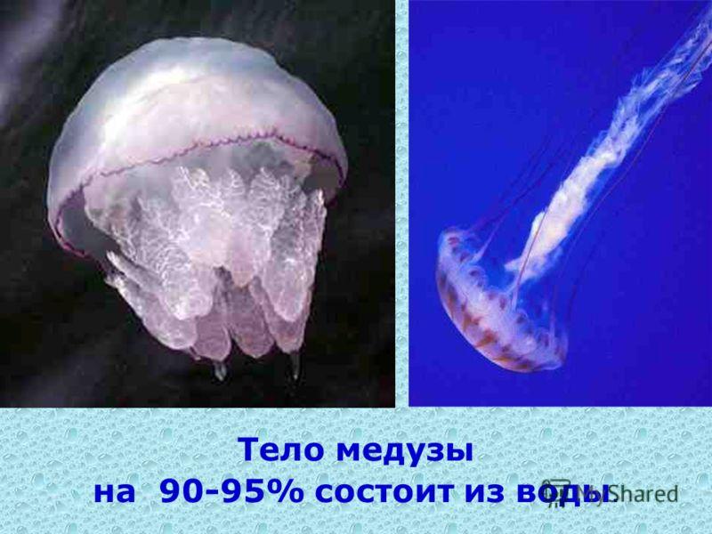 Тело медузы на 90-95% состоит из воды.