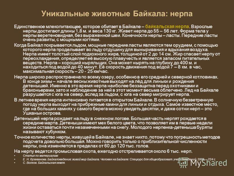 Уникальные животные Байкала: нерпа Единственное млекопитающее, которое обитает в Байкале – байкальская нерпа. Взрослые нерпы достигают длины 1,8 м. и веса 130 кг. Живет нерпа до 55 – 56 лет. Форма тела у нерпы веретеновидная, без выраженной шеи. Коне