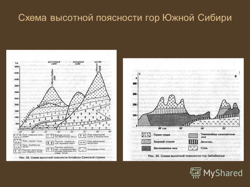 Схема высотной поясности гор Южной Сибири
