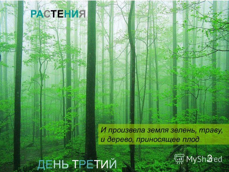 ДЕНЬ ТРЕТИЙ И произвела земля зелень, траву, и дерево, приносящее плод РАСТЕНИЯ 3
