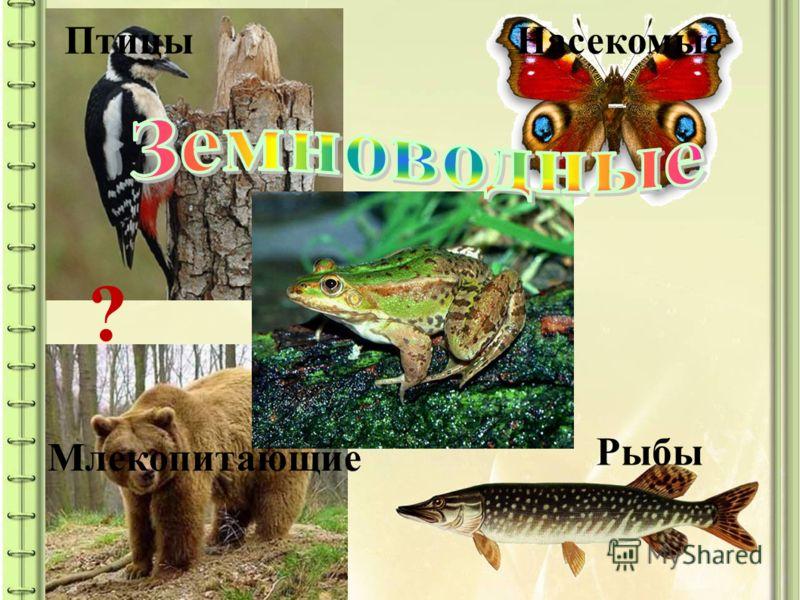ПтицыНасекомые Рыбы Млекопитающие ?