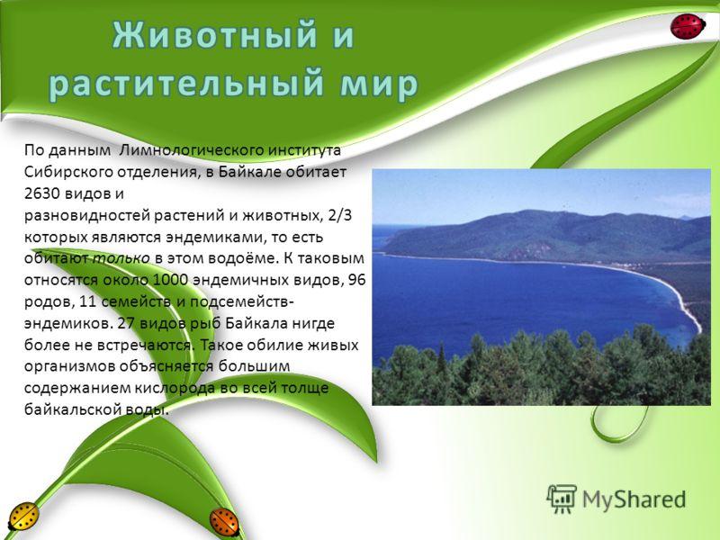 По данным Лимнологического института Сибирского отделения, в Байкале обитает 2630 видов и разновидностей растений и животных, 2/3 которых являются эндемиками, то есть обитают только в этом водоёме. К таковым относятся около 1000 эндемичных видов, 96