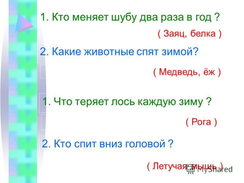 1. Кто меняет шубу два раза в год ? ( Заяц, белка ) 2. Какие животные спят зимой? ( Медведь, ёж ) 1. Что теряет лось каждую зиму ? ( Рога ) 2. Кто спит вниз головой ? ( Летучая мышь )