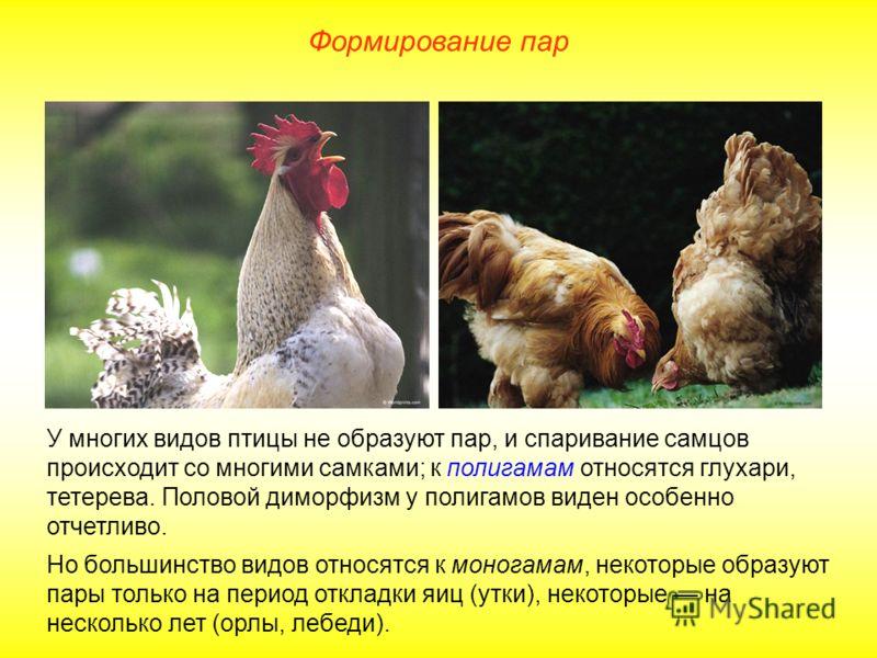 Формирование пар У многих видов птицы не образуют пар, и спаривание самцов происходит со многими самками; к полигамам относятся глухари, тетерева. Половой диморфизм у полигамов виден особенно отчетливо. Но большинство видов относятся к моногамам, нек
