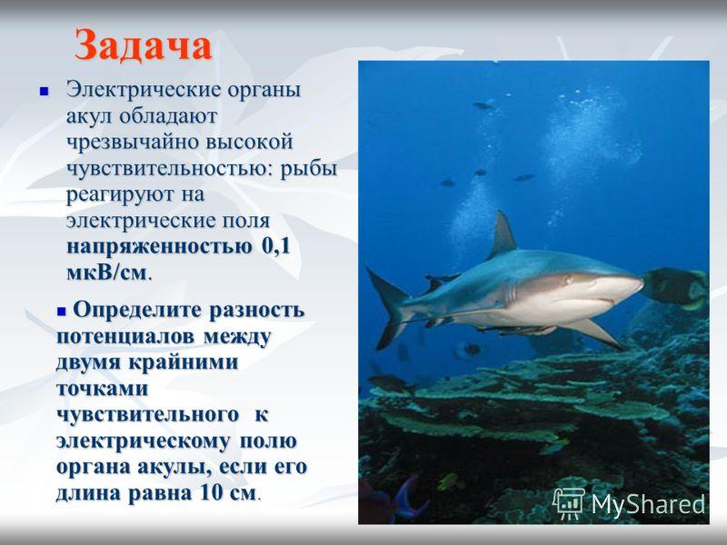 Задача Электрические органы акул обладают чрезвычайно высокой чувствительностью: рыбы реагируют на электрические поля напряженностью 0,1 мкВ/см. Электрические органы акул обладают чрезвычайно высокой чувствительностью: рыбы реагируют на электрические