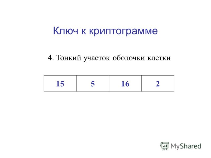 Ключ к криптограмме 3.Пространства между клетками, заполненные воздухом или межклеточной жидкостью 11121336121014838