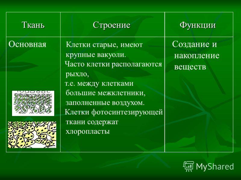 Обеспечивает рост растения Клетки молодые, способные делиться, плотно прилегают друг к другу Образова- тельная ФункцииСтроениеТкань