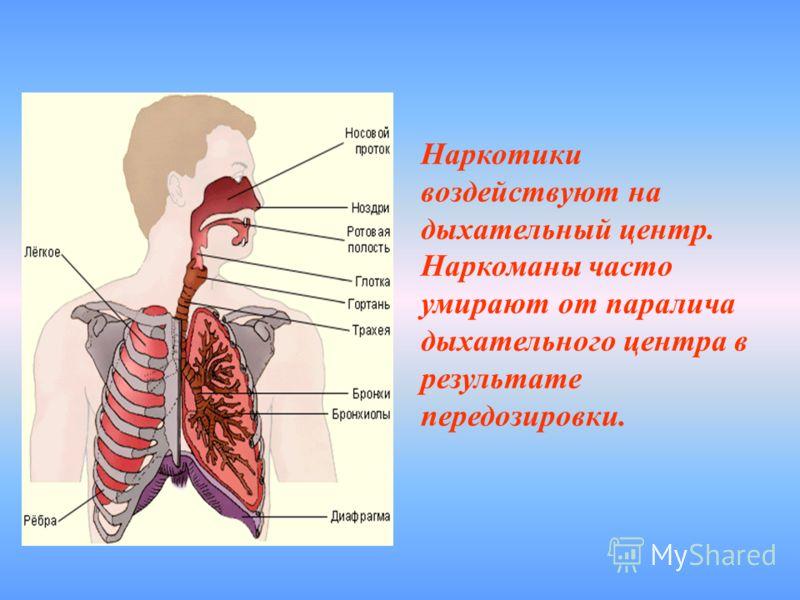Наркотики воздействуют на дыхательный центр. Наркоманы часто умирают от паралича дыхательного центра в результате передозировки.