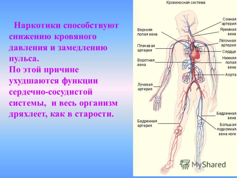 Наркотики способствуют снижению кровяного давления и замедлению пульса. По этой причине ухудшаются функции сердечно-сосудистой системы, и весь организм дряхлеет, как в старости.