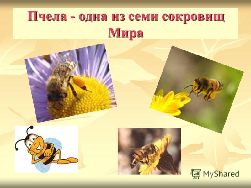 Пчела - одна из семи сокровищ Мира