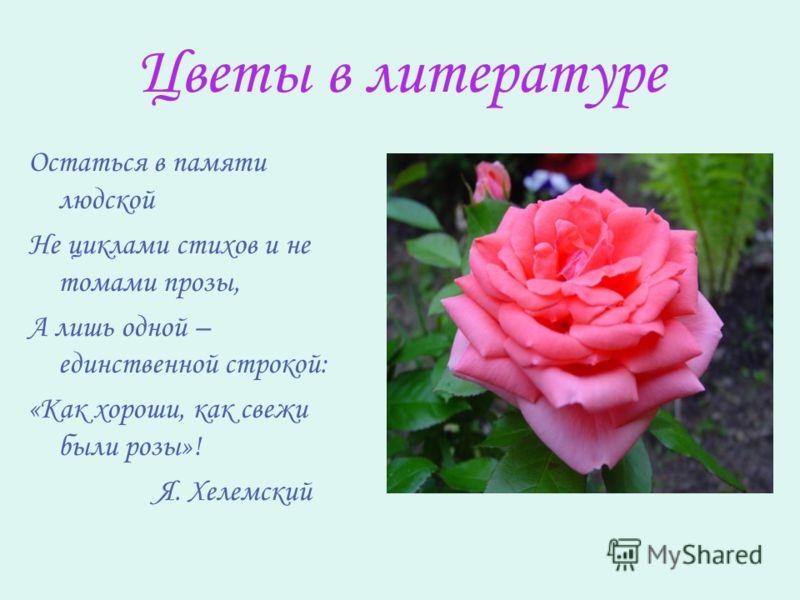 Цветы в литературе Остаться в памяти людской Не циклами стихов и не томами прозы, А лишь одной – единственной строкой: «Как хороши, как свежи были розы»! Я. Хелемский