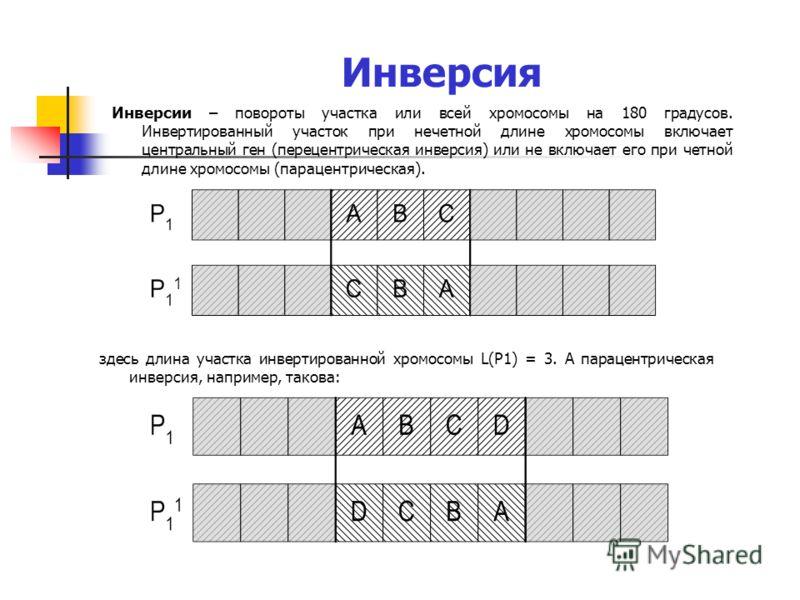 Инверсия Инверсии – повороты участка или всей хромосомы на 180 градусов. Инвертированный участок при нечетной длине хромосомы включает центральный ген (перецентрическая инверсия) или не включает его при четной длине хромосомы (парацентрическая). здес