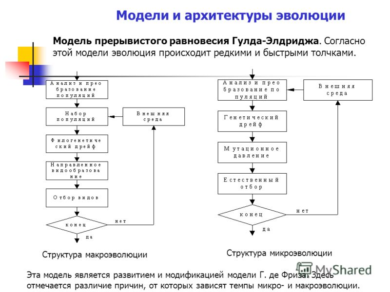 Модель прерывистого равновесия Гулда-Элдриджа. Согласно этой модели эволюция происходит редкими и быстрыми толчками. Модели и архитектуры эволюции Структура макроэволюции Структура микроэволюции Эта модель является развитием и модификацией модели Г.