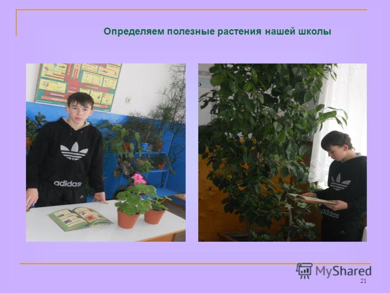 21 Определяем полезные растения нашей школы