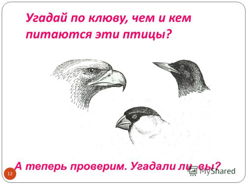 Угадай по клюву, чем и кем питаются эти птицы ? А теперь проверим. Угадали ли вы? 12