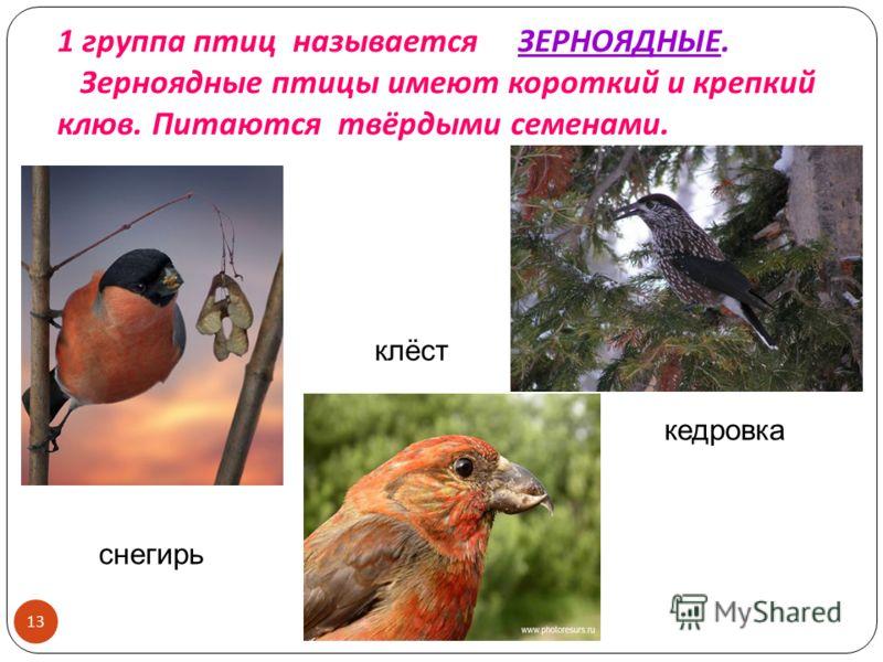 1 группа птиц называется ЗЕРНОЯДНЫЕ. Зерноядные птицы имеют короткий и крепкий клюв. Питаются твёрдыми семенами. кедровка клёст снегирь 13