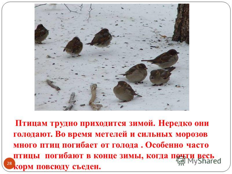 Птицам трудно приходится зимой. Нередко они голодают. Во время метелей и сильных морозов много птиц погибает от голода. Особенно часто птицы погибают в конце зимы, когда почти весь корм повсюду съеден. 28