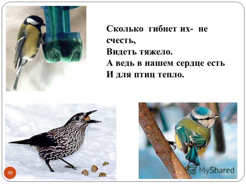Сколько гибнет их- не счесть, Видеть тяжело. А ведь в нашем сердце есть И для птиц тепло. 30