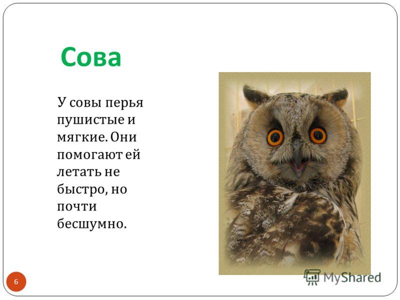 Сова У совы перья пушистые и мягкие. Они помогают ей летать не быстро, но почти бесшумно. 6