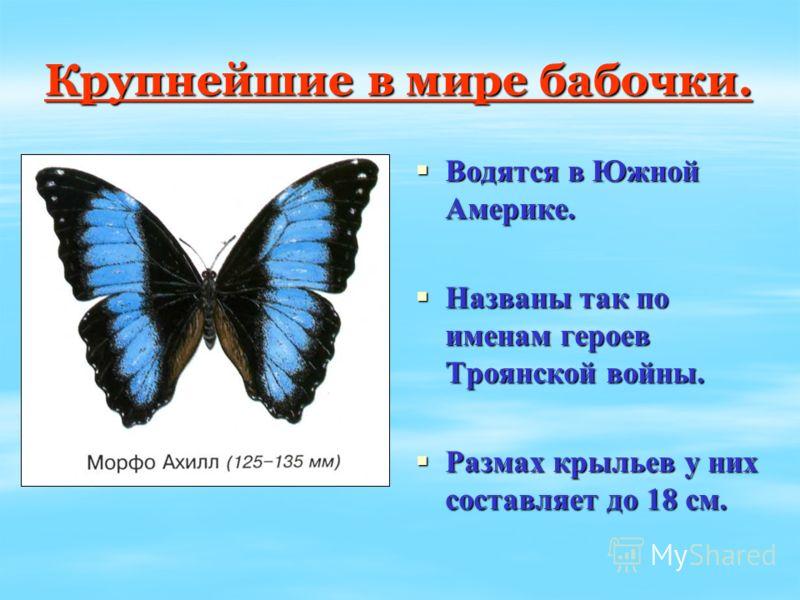 Крупнейшие в мире бабочки. Водятся в Южной Америке. Водятся в Южной Америке. Названы так по именам героев Троянской войны. Названы так по именам героев Троянской войны. Размах крыльев у них составляет до 18 см. Размах крыльев у них составляет до 18 с