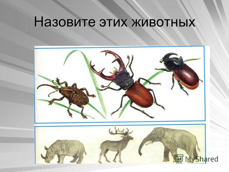 Назовите этих животных