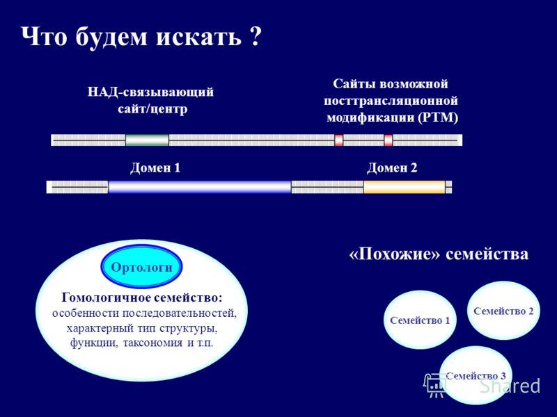 Что будем искать ? НАД-связывающий сайт/центр Сайты возможной посттрансляционной модификации (РТМ) Домен 1Домен 2 Гомологичное семейство: особенности последовательностей, характерный тип структуры, функции, таксономия и т.п. Семейство 1 Семейство 3 С