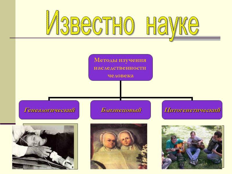 Методы изучения наследственности человека ГенеалогическийБлизнецовыйЦитогенетический