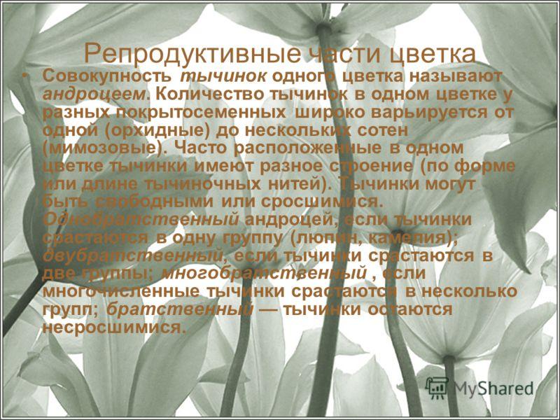 Репродуктивные части цветка Совокупность тычинок одного цветка называют андроцеем. Количество тычинок в одном цветке у разных покрытосеменных широко варьируется от одной (орхидные) до нескольких сотен (мимозовые). Часто расположенные в одном цветке т