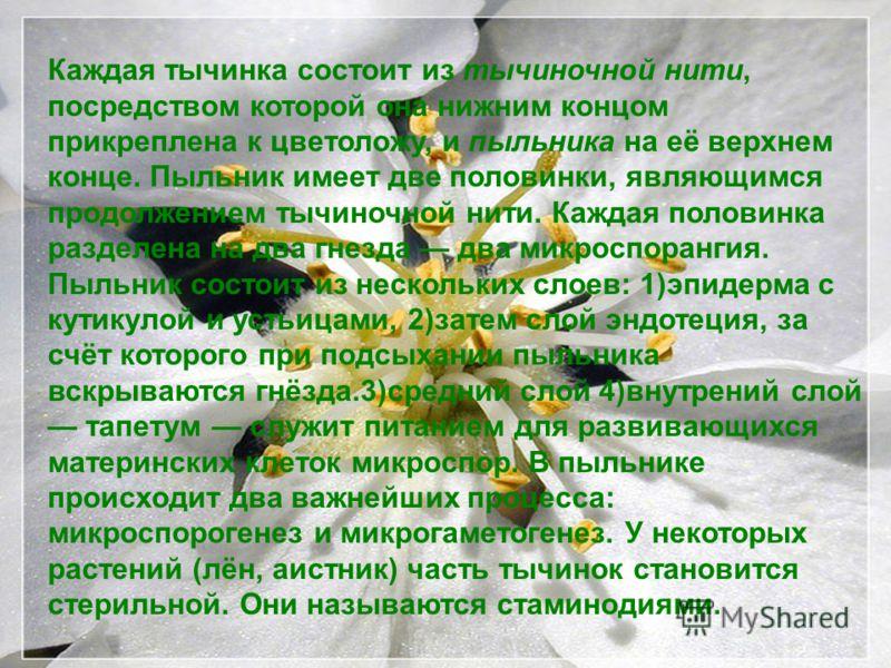 Каждая тычинка состоит из тычиночной нити, посредством которой она нижним концом прикреплена к цветоложу, и пыльника на её верхнем конце. Пыльник имеет две половинки, являющимся продолжением тычиночной нити. Каждая половинка разделена на два гнезда д