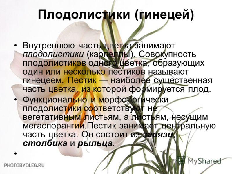 Плодолистики (гинецей) Внутреннюю часть цветка занимают плодолистики (карпеллы). Совокупность плодолистиков одного цветка, образующих один или несколько пестиков называют гинецеем. Пестик наиболее существенная часть цветка, из которой формируется пло