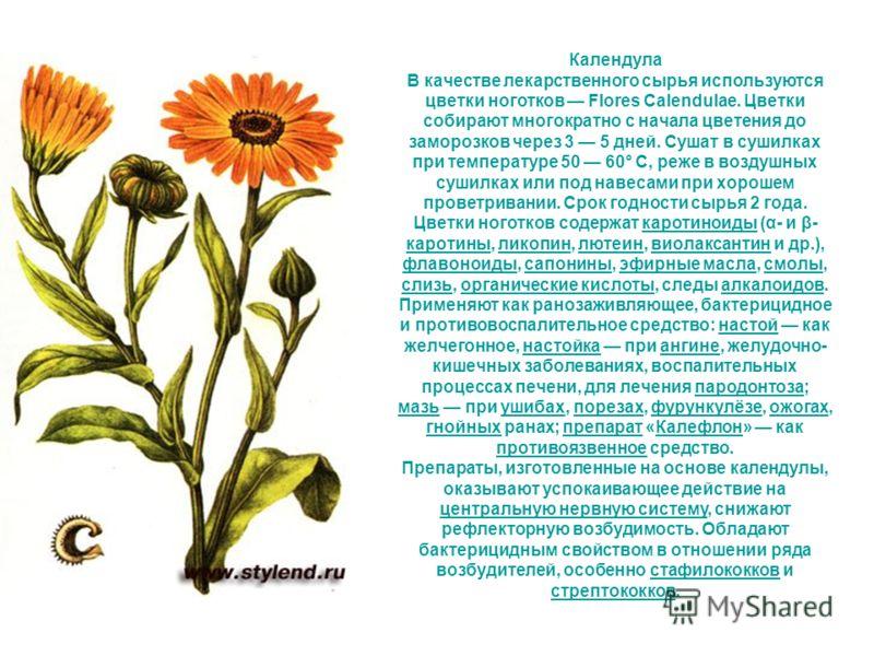 Календула В качестве лекарственного сырья используются цветки ноготков Flores Calendulae. Цветки собирают многократно с начала цветения до заморозков через 3 5 дней. Сушат в сушилках при температуре 50 60° С, реже в воздушных сушилках или под навесам