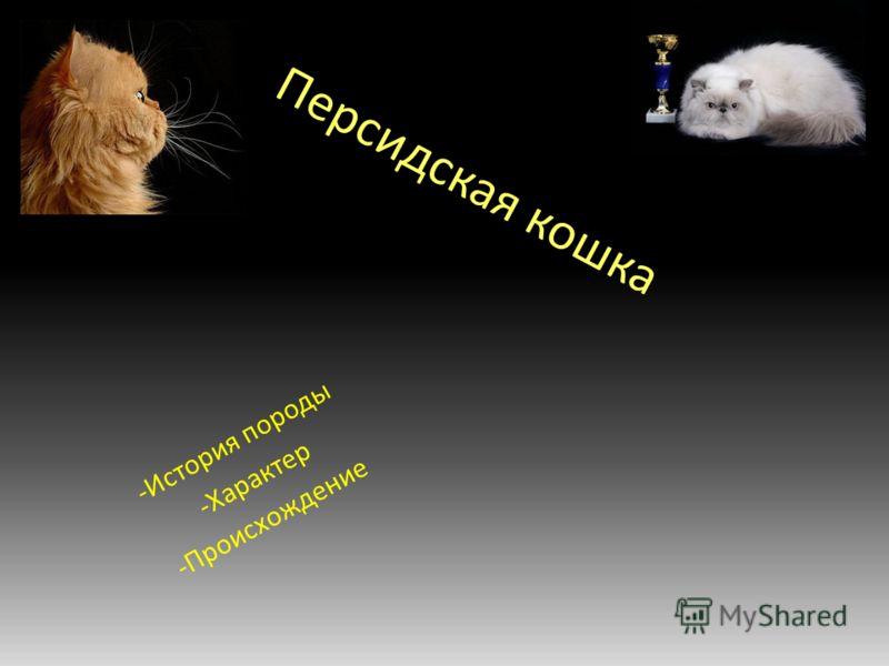 Персидская кошка -История породы -Характер -Происхождение
