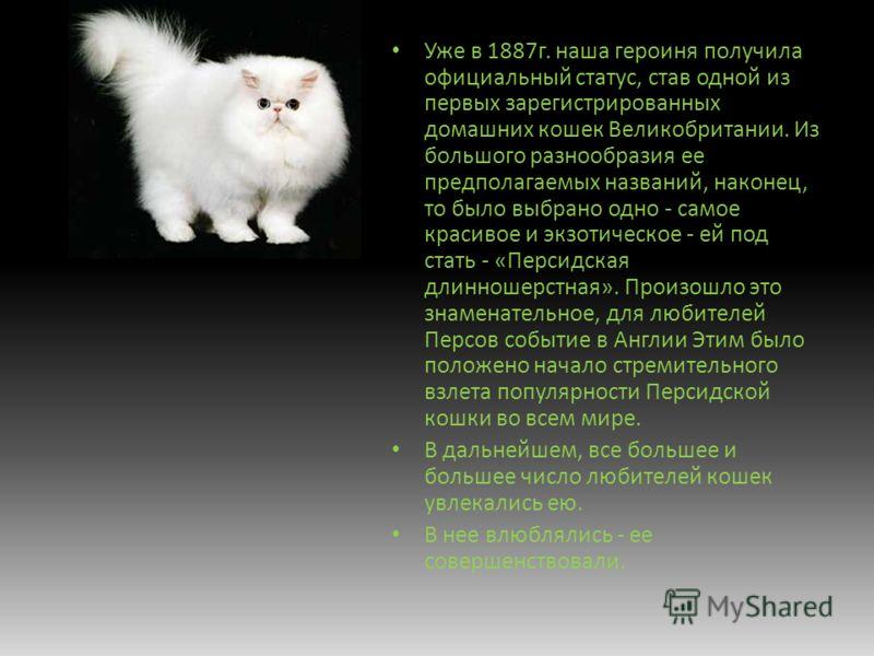 Уже в 1887г. наша героиня получила официальный статус, став одной из первых зарегистрированных домашних кошек Великобритании. Из большого разнообразия ее предполагаемых названий, наконец, то было выбрано одно - самое красивое и экзотическое - ей под