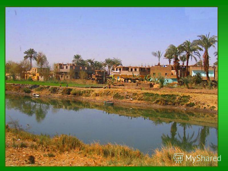 Вопрос 17. Почему каждый землянин может воскликнуть: «Я родом из Африки»? потому что в долине Нила находится прародина человека потому что мы каждое лето загораем потому что в долине Нила возникло первое в истории человечества государство 2 1 3 2 пот