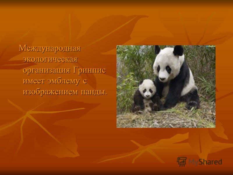 Международная экологическая организация Гринпис имеет эмблему с изображением панды. Международная экологическая организация Гринпис имеет эмблему с изображением панды.