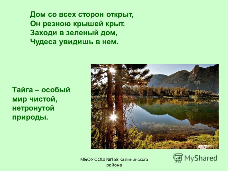 МБОУ СОШ 158 Калининского района Дом со всех сторон открыт, Он резною крышей крыт. Заходи в зеленый дом, Чудеса увидишь в нем. Тайга – особый мир чистой, нетронутой природы.