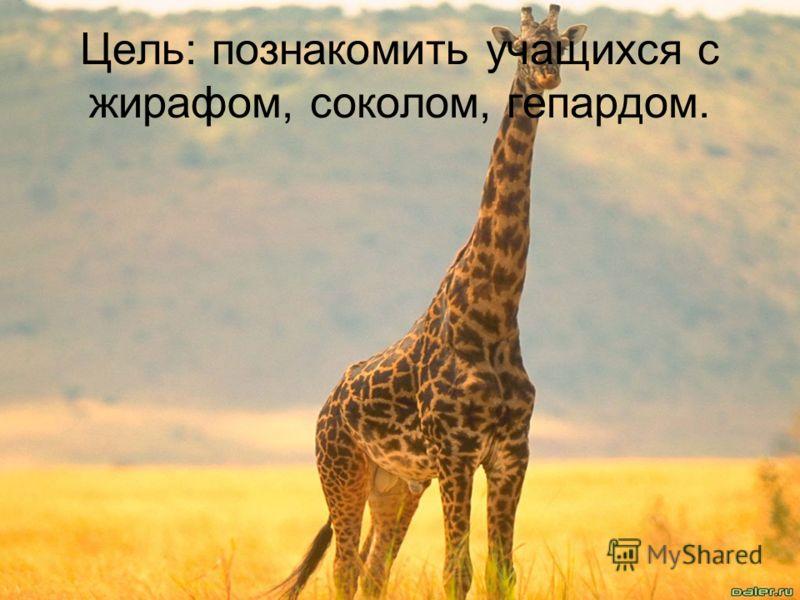 Цель: познакомить учащихся с жирафом, соколом, гепардом.