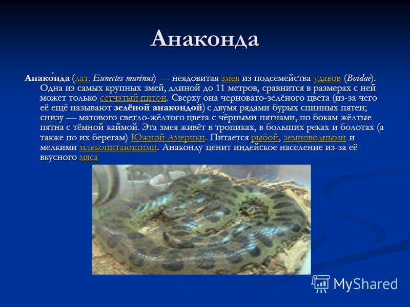 Анаконда Анаконда (лат. Eunectes murinus) неядовитая змея из подсемейства удавов (Boidae). Одна из самых крупных змей, длиной до 11 метров, сравнится в размерах с ней может только сетчатый питон. Сверху она черновато-зелёного цвета (из-за чего её ещё