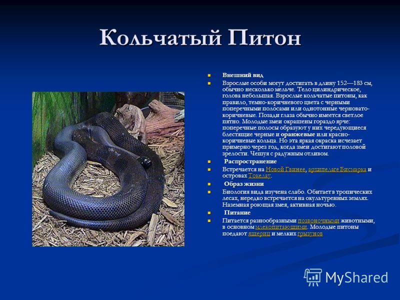 Кольчатый Питон Внешний вид Взрослые особи могут достигать в длину 152183 см, обычно несколько мельче. Тело цилиндрическое, голова небольшая. Взрослые кольчатые питоны, как правило, темно-коричневого цвета с черными поперечными полосами или однотонны