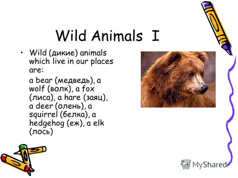 Wild Animals I Wild (дикие) animals which live in our places are: a bear (медведь), a wolf (волк), a fox (лиса), a hare (заяц), a deer (олень), a squirrel (белка), a hedgehog (еж), a elk (лось)