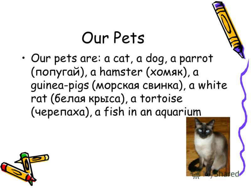 Our Pets Our pets are: a cat, a dog, a parrot (попугай), a hamster (хомяк), a guinea-pigs (морская свинка), a white rat (белая крыса), a tortoise (черепаха), a fish in an aquarium