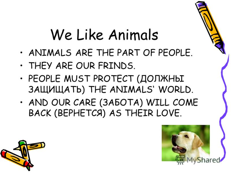 We Like Animals ANIMALS ARE THE PART OF PEOPLE. THEY ARE OUR FRINDS. PEOPLE MUST PROTECT (ДОЛЖНЫ ЗАЩИЩАТЬ) THE ANIMALS WORLD. AND OUR CARE (ЗАБОТА) WILL COME BACK (ВЕРНЕТСЯ) AS THEIR LOVE.
