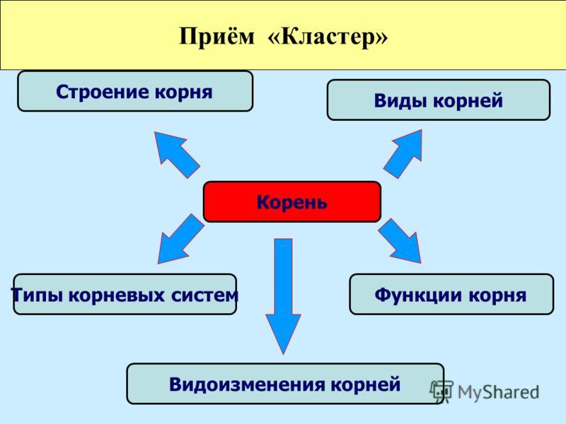 Строение корня Виды корней Типы корневых системФункции корня Видоизменения корней Корень Приём «Кластер»