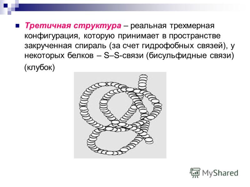 Третичная структура – реальная трехмерная конфигурация, которую принимает в пространстве закрученная спираль (за счет гидрофобных связей), у некоторых белков – S–S-связи (бисульфидные связи) (клубок)