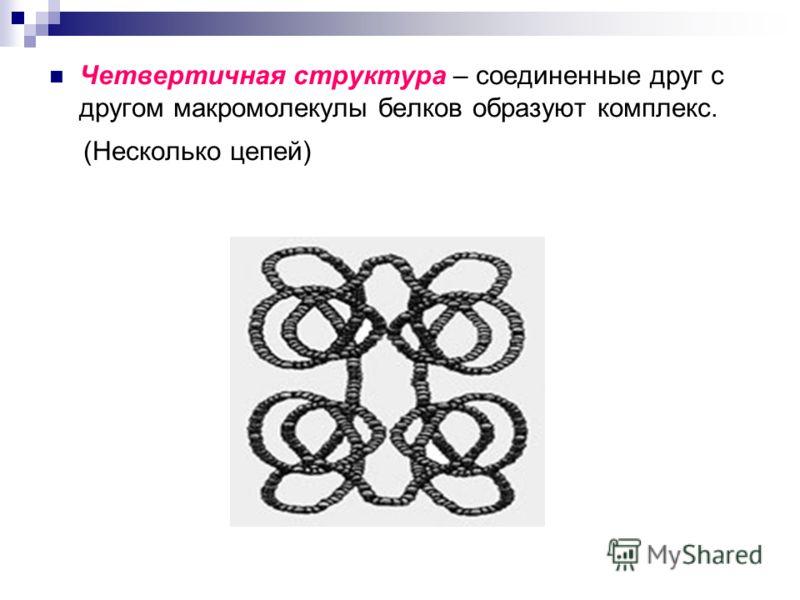 Четвертичная структура – соединенные друг с другом макромолекулы белков образуют комплекс. (Несколько цепей)